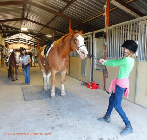 reluctant horse at bel canto farms wimberley