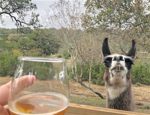 shady llama beer garden wimberley r12