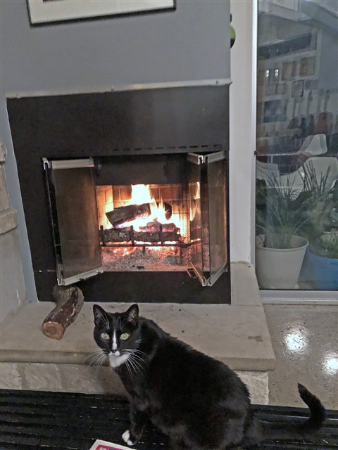 kay-so the cat by the fireplace austin modhouse