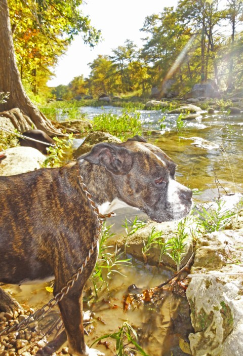 eichler the boxer looks at the blanco river