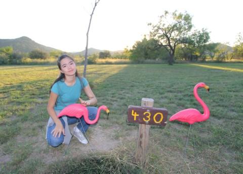 flamingos at garner state park site #430