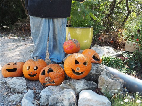 decomposing jackolanterns