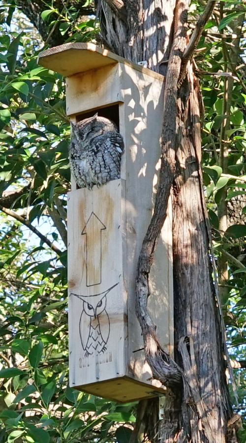 owl reach box austin west lake hills tx