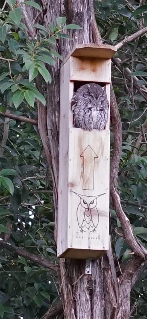 owl reach box austin westlake hooter