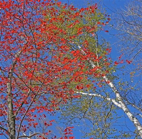 NEK fall foliage 2018 vermont