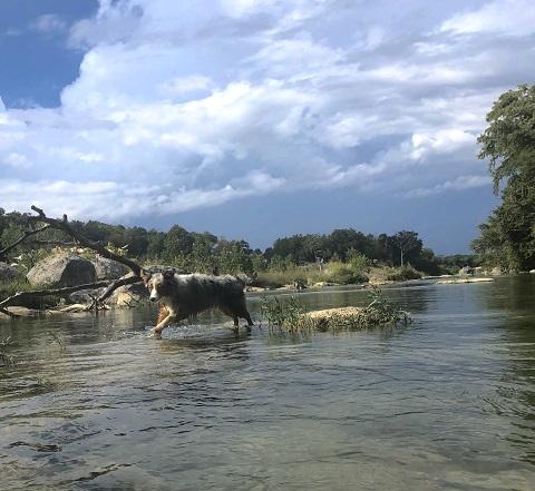 blanco river wimberly river rapids