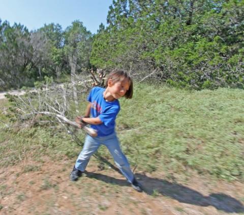 wimberley cedar removal