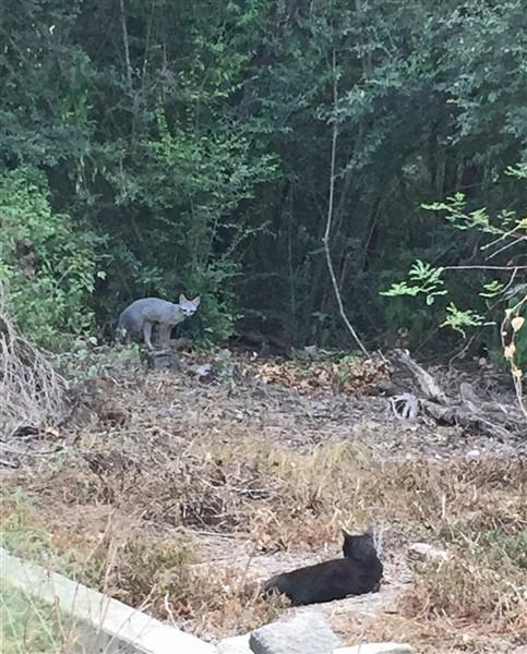 west lake hills fox texas
