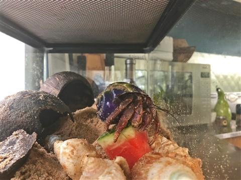 padre the hermit crab fresh fruit buffet